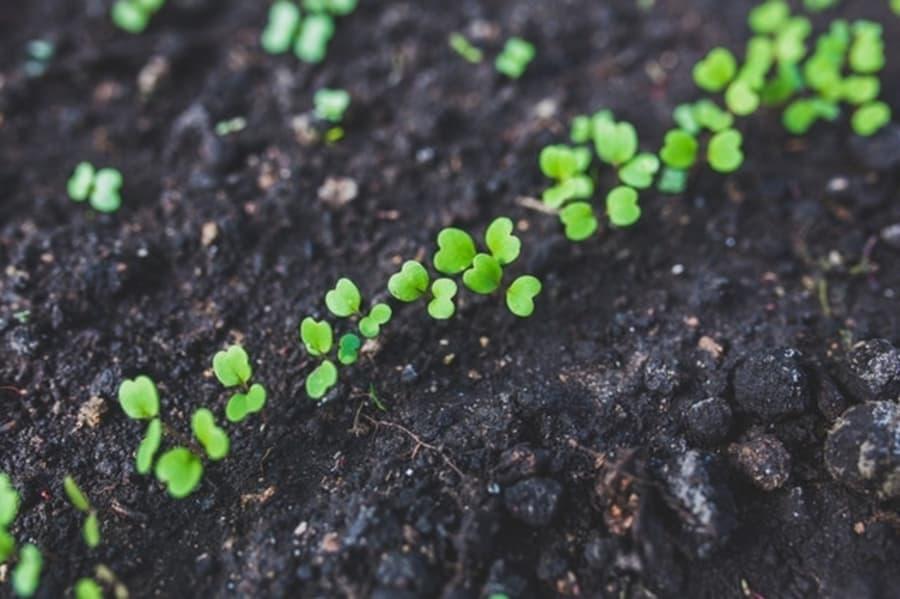 What temperature do seeds germinate