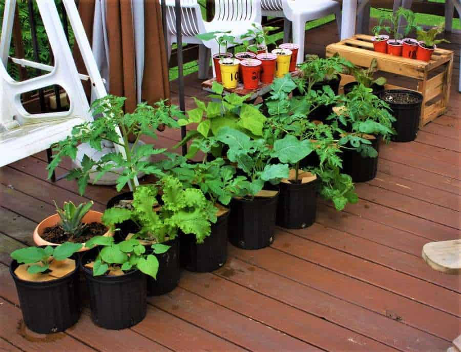 What Is Organic Container Gardening A Guide To Getting Started