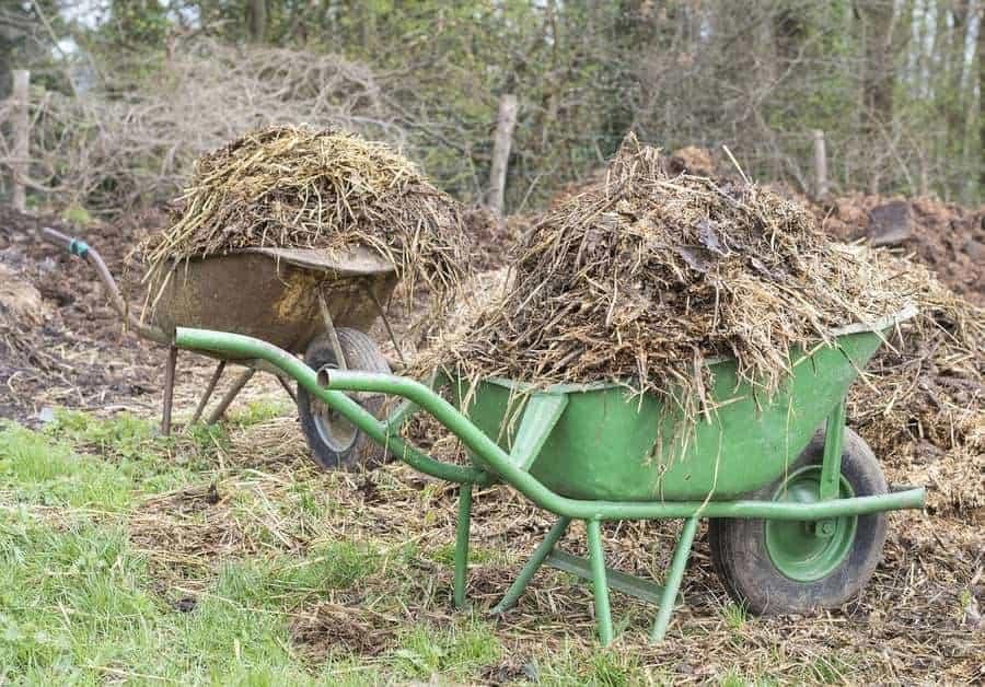 Compost vs Manure