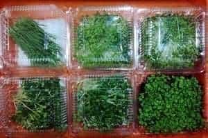 Microgreens Storage