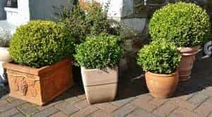 Shrub Containers