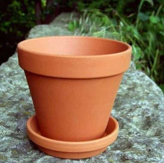 Plant with Saucer