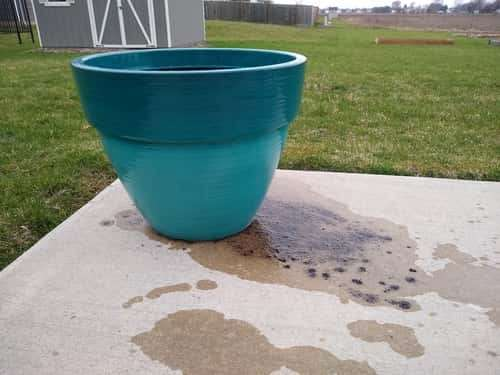 Soil Washing out of Pot - Small