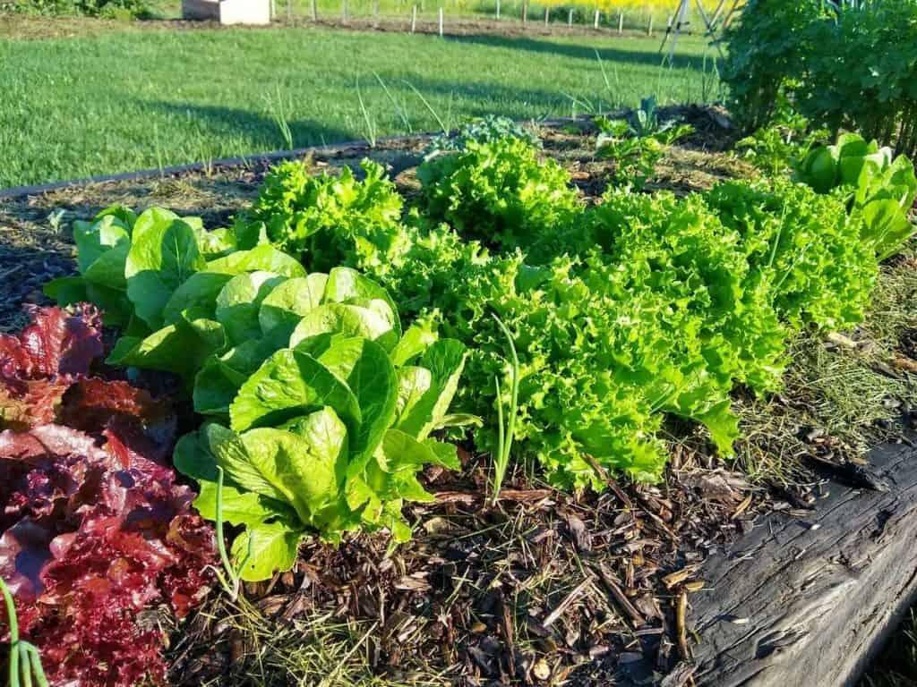 Easy Garden Tips for Beginners