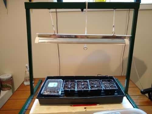 Seed Starting Setup