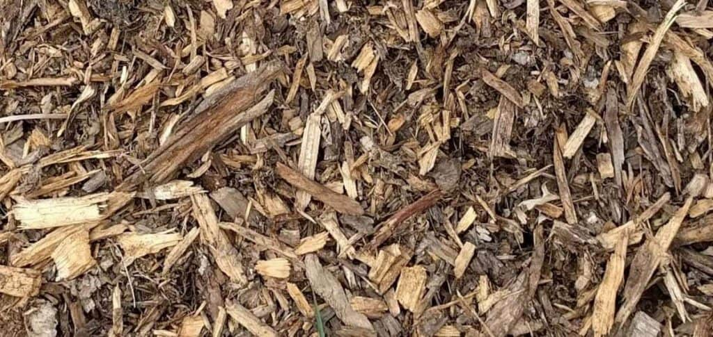 Wood Chips as Mulch