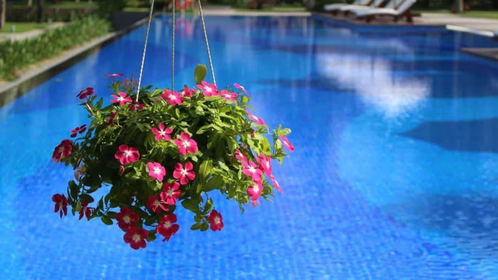 Watering Plants with Pool Water