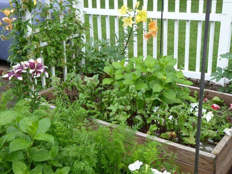 Plant flowers and herbs together