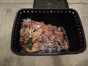 Setting up worm bin
