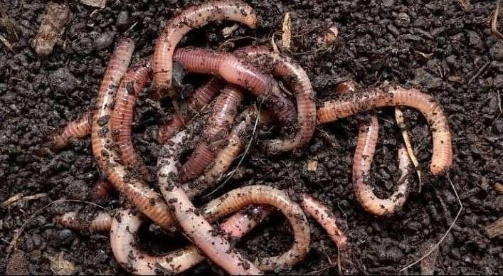 Worms in garden